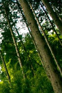 京都府内産木材